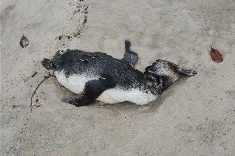 Brazil Dead Penguins