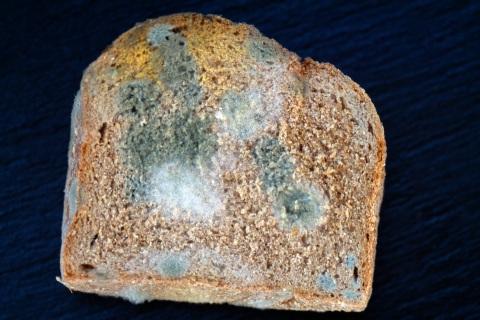 Piece of Moldy Bread