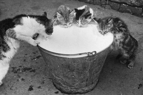 Cat's Got The Cream