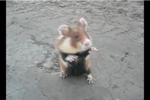 YouTube/ Evil Hamster