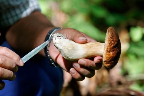 Man cuts mushroom with knife