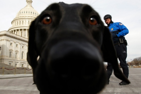 A sniffer dog gets close to the lens