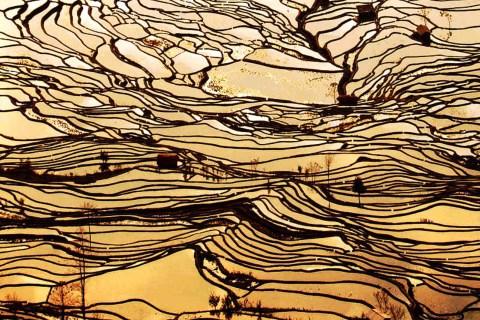 China terraced rice field