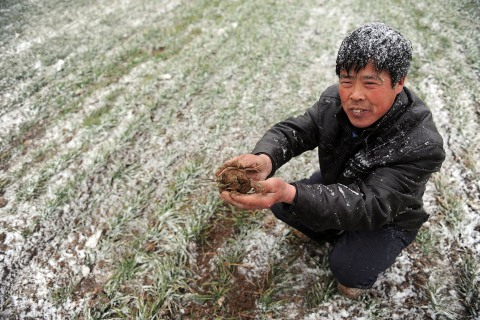 Drought Threatens China Wheat
