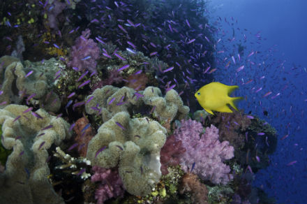 Climate change is destroying coral reefs