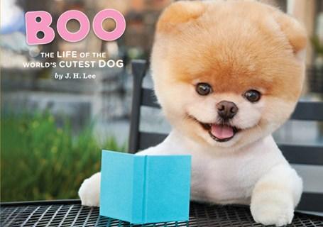 boo_dog