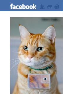 Cooper Photographer Cat