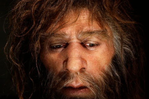 Recreated face of a neanderthal male