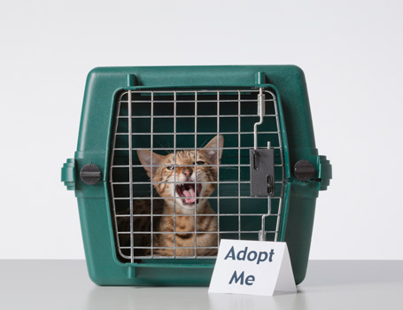 Take Your Pick of the Litter: It's Adopt-A-Shelter Cat Month!