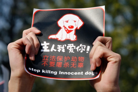 """A protester holds up a sign during a rally against the new """"one-dog policy"""" in Beijing"""