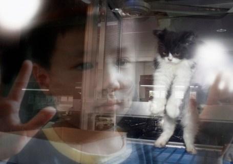 Petland kitten