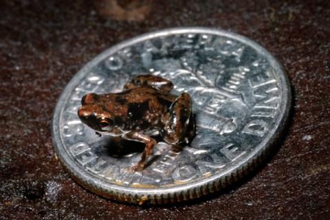 APTOPIX Teeny Tiny Frog