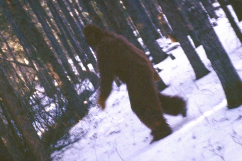 Is this Bigfoot?