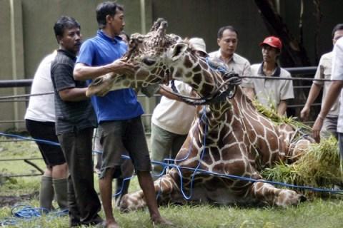 Indonesia's Surabaya Zoo
