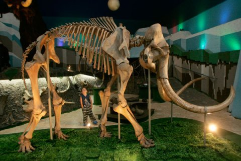 MammothSkeleton
