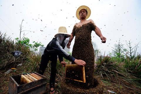 China Bees Record