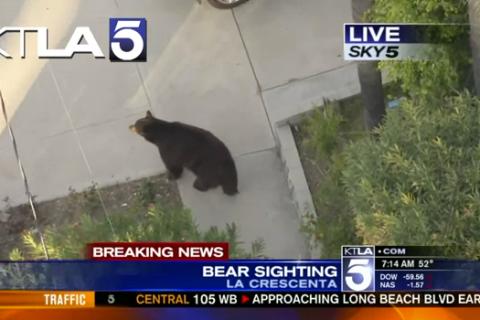 Bear Surprises Texter