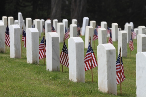 Veterans Day Flags in Cemetery