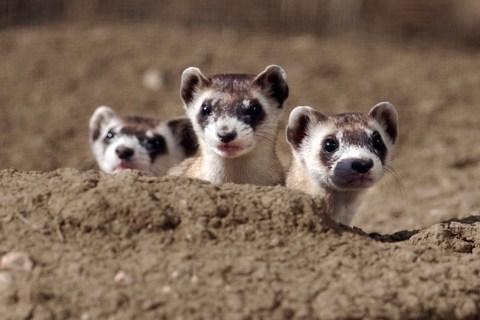 adorable endangered species