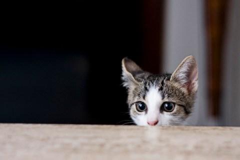 kittykiller