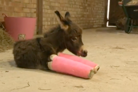 donkey in casts screengrab