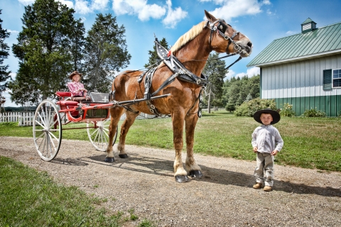 Tallest Horse