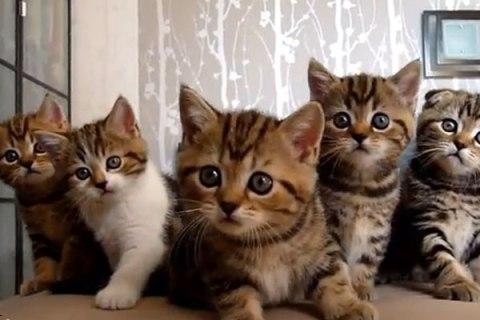 KittensDancing