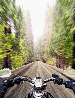 image: Biker riding road in forest (personal perspective)