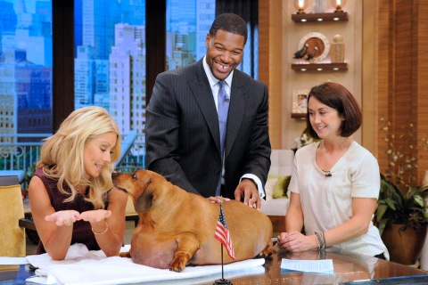 """Obie the Dachsund appears on the talk show, """"LIVE! with Kelly and Michael"""" on Sept. 14, 2012."""