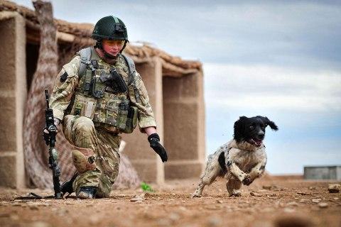 top10_animal_afghanistandog