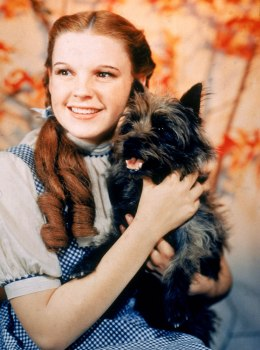 image: Dorothy and Toto from the Wizard of Oz
