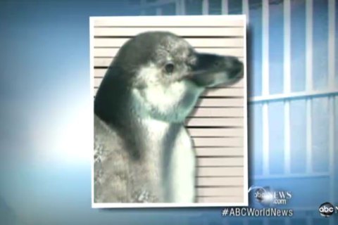 top10_animal_penguin