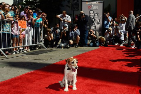 top10_animal_uggie