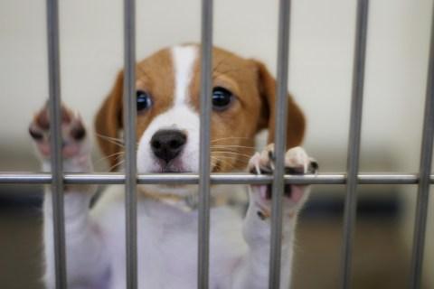 puppy in a pound