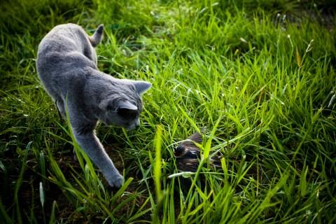 cat-traps-birds