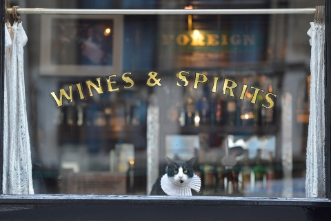A cat watches passers-by from a pub window in central London