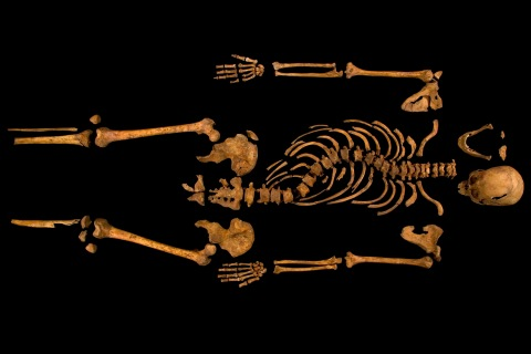 The skeleton of Richard III, which was discovered at the Grey Friars excavation site in Leicester, central England, is seen in this photograph provided by the University of Leicester and received in London
