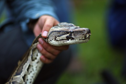 #6 - python hunting - 15 weirdest Florida news stories