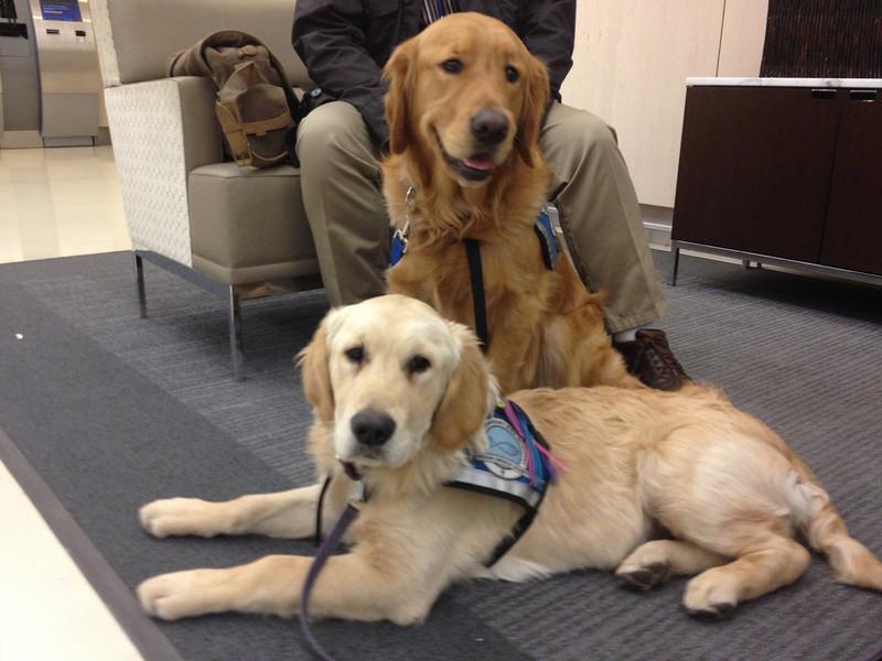 k9 comfort dogs