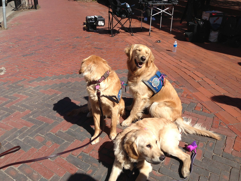 K9 Comfort Dogs in Boston