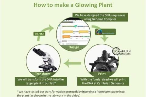 Glo Plant kickstarter 2