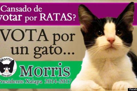 o-MORRIS-THE-CAT-570