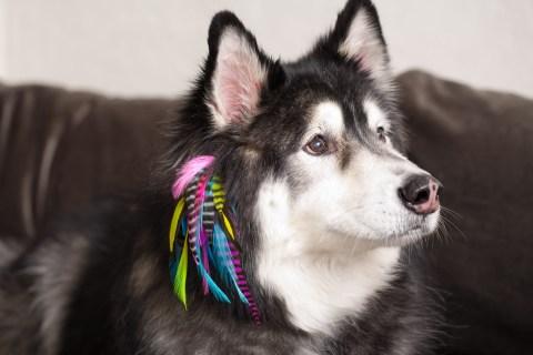 Condition-Culture-Puppylocks