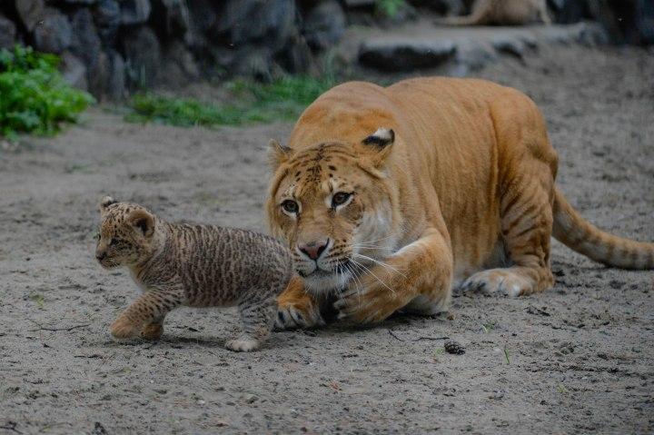 Russia Zoo
