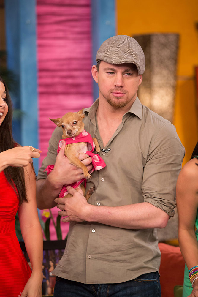"Channing Tatum and his dog Honey attend Univision's morning show ""Despierta America"" on June 24, 2013."