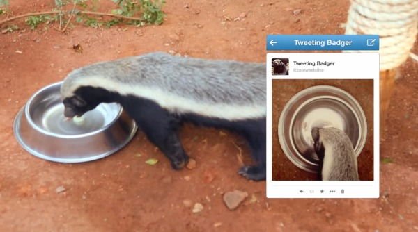 BG Badger Selfie