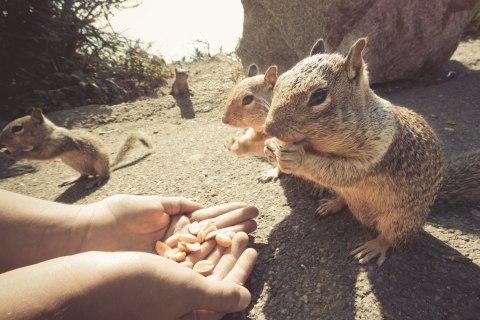 peanutsquirrel