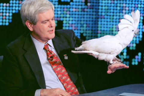 Gingrich and cockatoo
