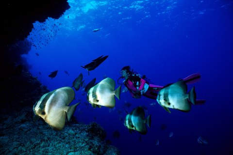 Diving the Maldives