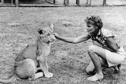 Joy Adamson And Elsa The Lioness